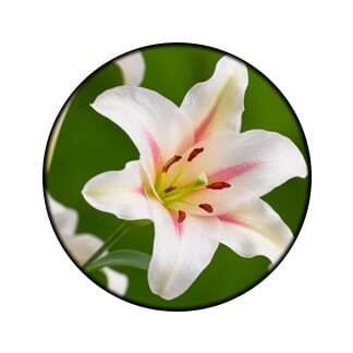 Arreglos de flores en Lirios