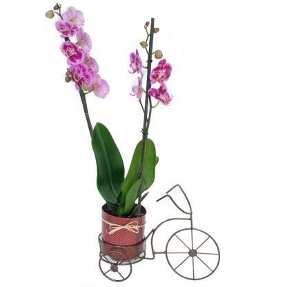 Planta Orquidea Grande
