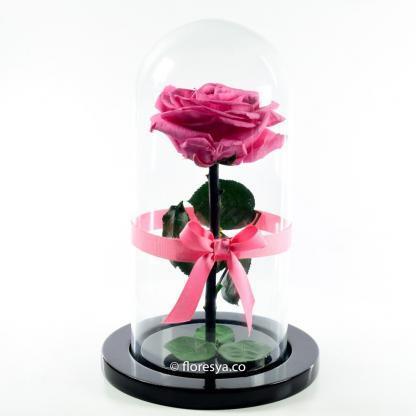 Rosa Encantada Rosado Medio