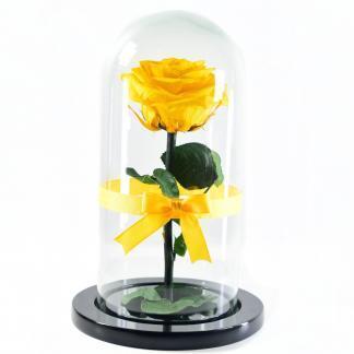 Rosa Encantada Amarilla