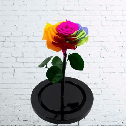 Rosa Eterna Arcoiris Urna Rosa Eterna Arcoiris Urna