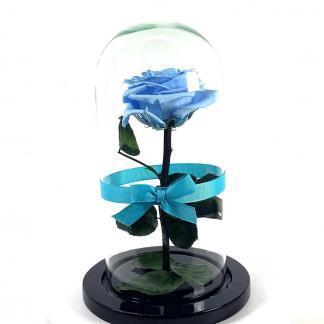 Rosa Eterna Azul Cenicienta Urna