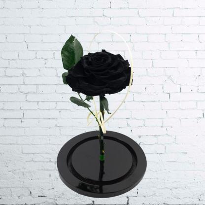 Rosa Negra Premium Urna Rosa Negra Premium Urna