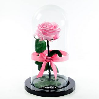 Rosa Encantada Rosado Claro