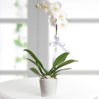 Orquídea bogota